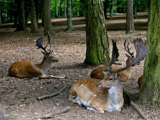 Foresta Umbria- Parco Nazionale del Gargano