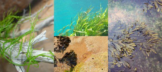 Cosa sono le Alghe e da dove provengono