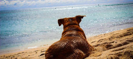 In vacanza con il cane sul Gargano